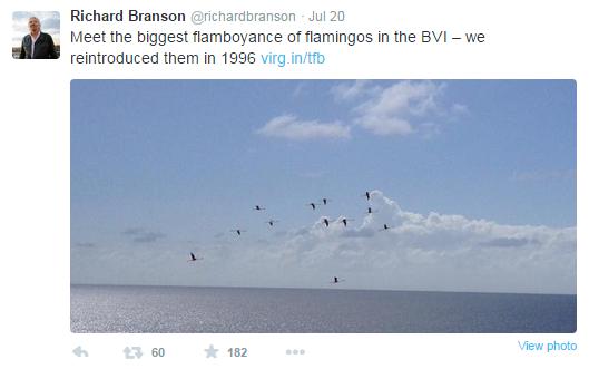 Branson flamingos